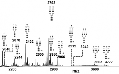 Glycan characterization of proteins during process development